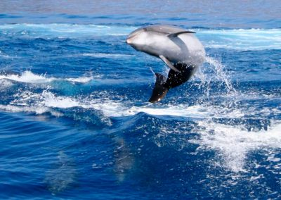 dolphins-whales-gallery1