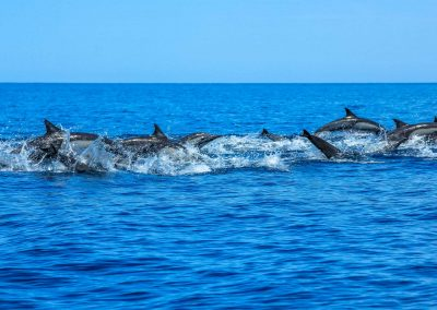 dolphins-whales-gallery3
