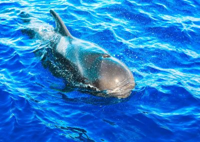 dolphins-whales-gallery4